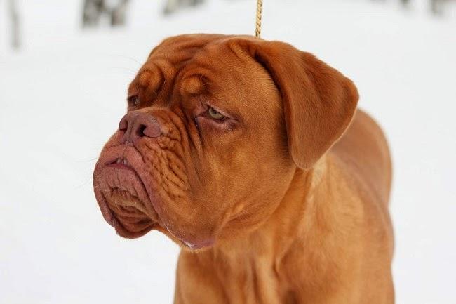 Niechęć psa do innych czworonogów