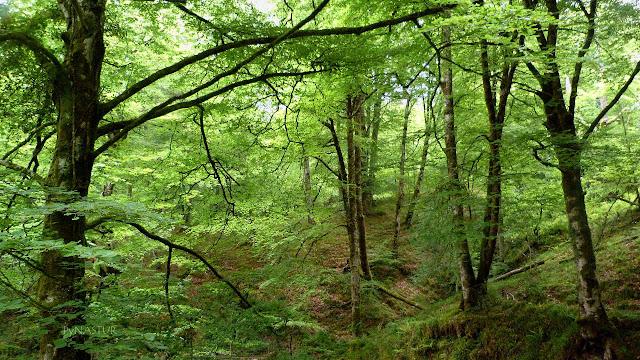 Bosque de Cea - Asturias