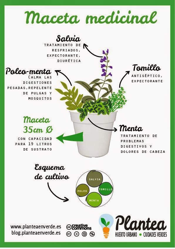 plantas aromaticas interior. gallery of with plantas aromaticas