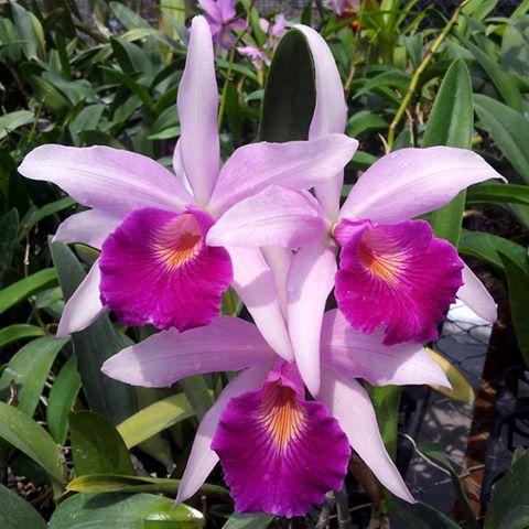 Orquideas una pasion cerebro efectivo - Tiestos para orquideas ...
