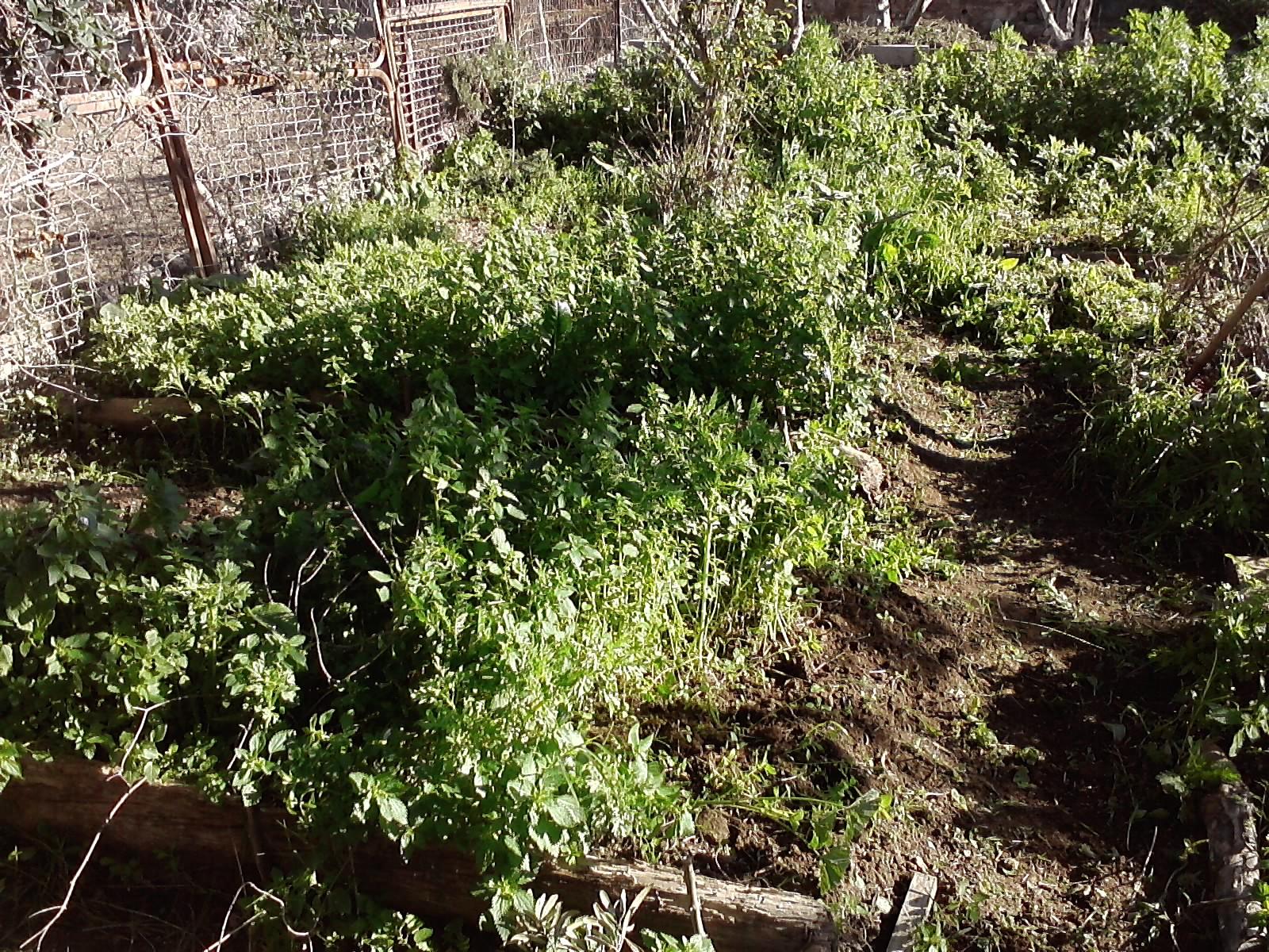 Experiencias en agricultura ecol gica y permacultura - Mini invernadero casero ...