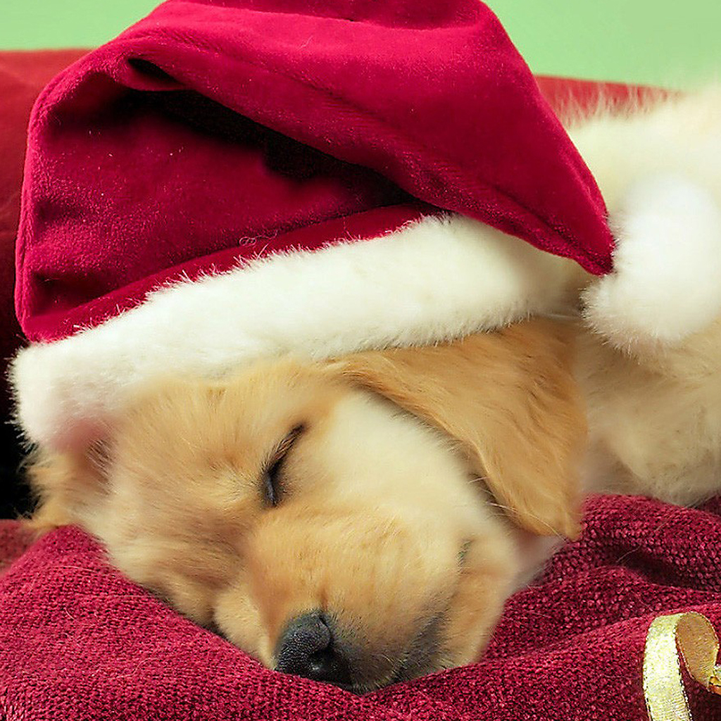 Christmas dogs tablet wallpaper tablet pc wallpapers christmas dogs tablet wallpaper voltagebd Choice Image