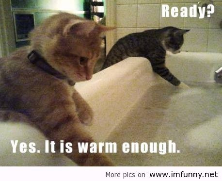 Funny Love Quotes With Animals : Funny-Animals--Funny-Quotes--Funny-Pictures--Funny-sayings--Awesome ...