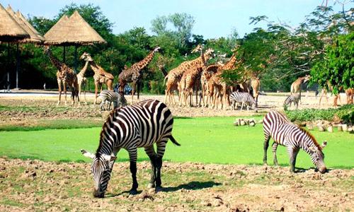 Vườn thú Safari World - Thái Lan