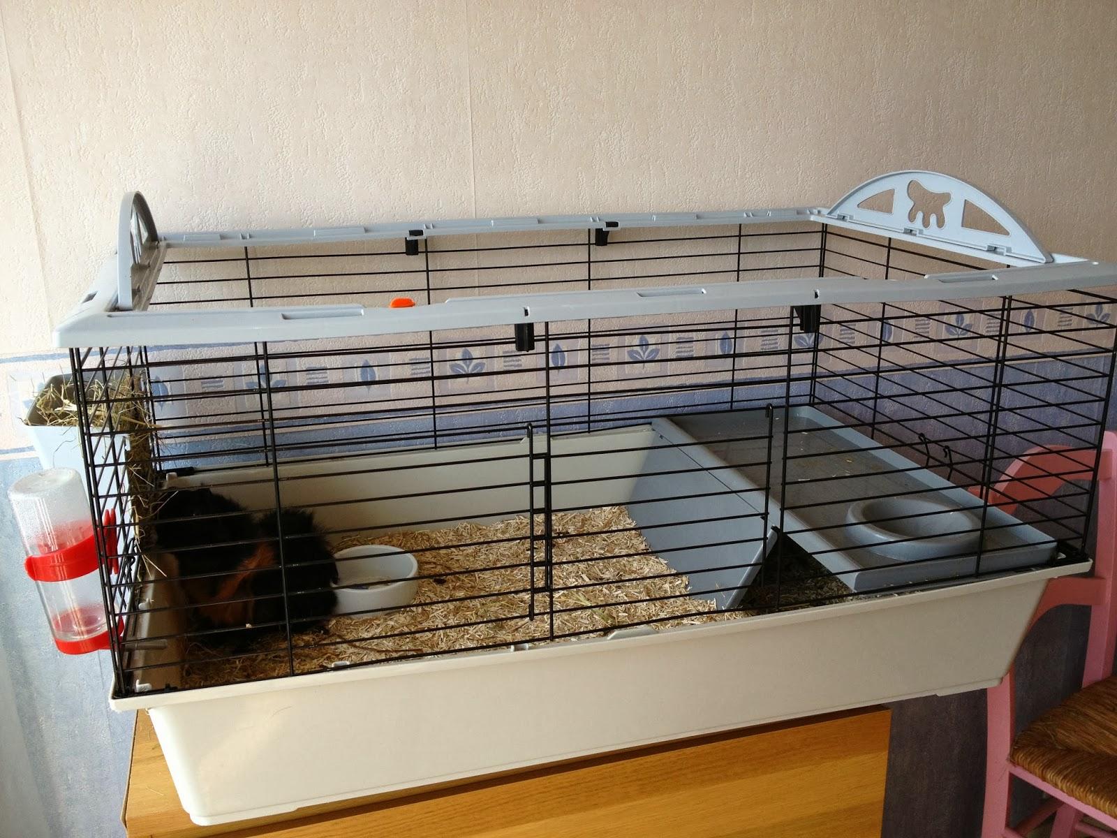mes cochons d 39 inde d 39 amour une nouvelle cage bien grande pour punky. Black Bedroom Furniture Sets. Home Design Ideas