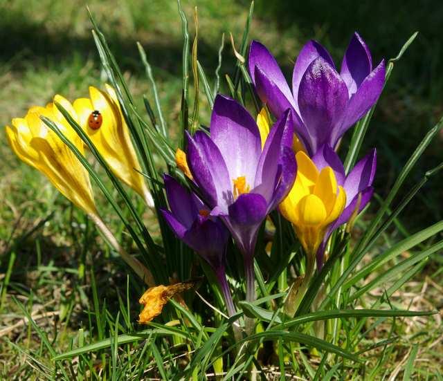 Znalezione obrazy dla zapytania kwiecień
