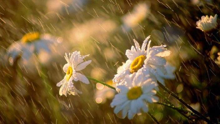 Algumas flores sob gotas de chuva