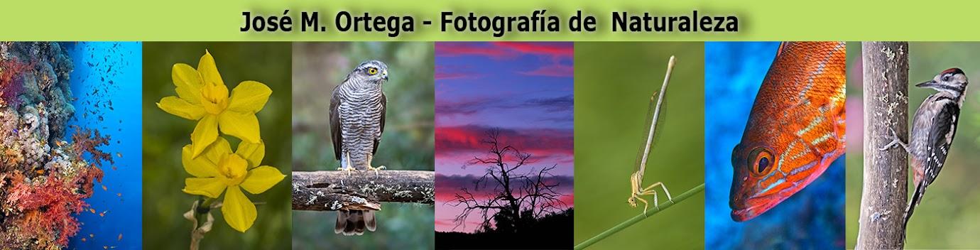 José M. Ortega - Fotografía de Naturaleza