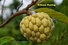 Srikaya Kuning