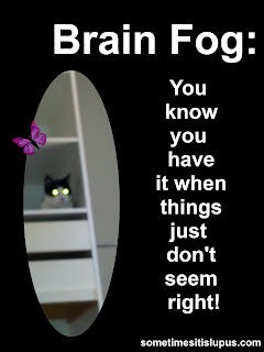 Image: Cat in wardrobe.  Text: Brain Fog you know you have it when things just don't seem right.