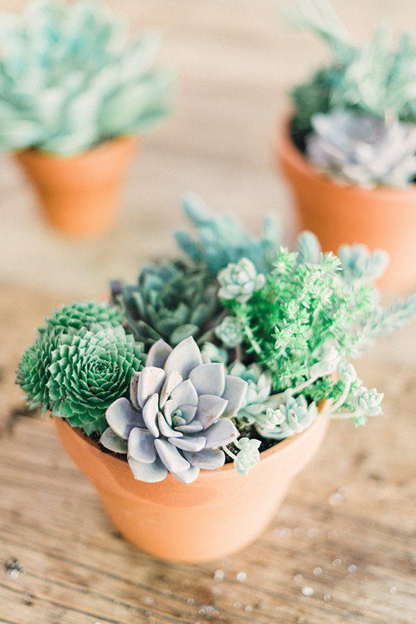 scandimagdeco le blog quand le cactus envahit nos int rieurs. Black Bedroom Furniture Sets. Home Design Ideas