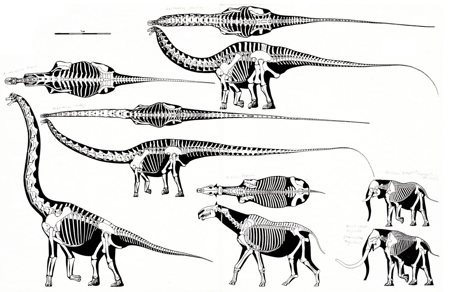 Jurassic%2Bsauropod%2Bskeletals%2BI Archive for the 'Sex Stories' Category