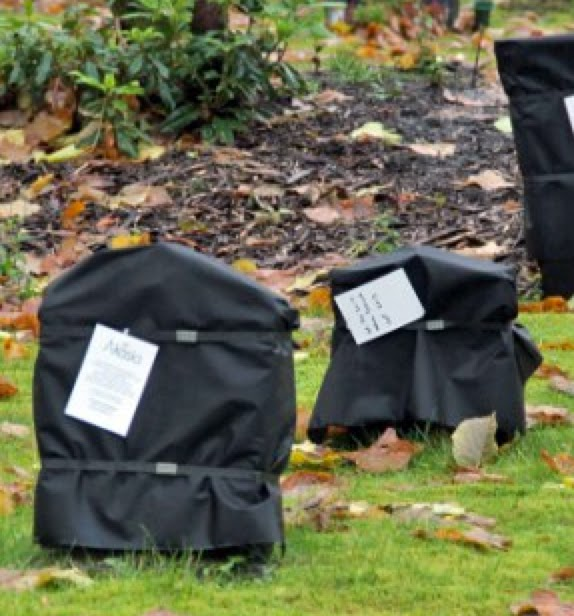 Outrage in Norway as hundreds of gravestones are covered in BLACK BAGS with a demand for payment