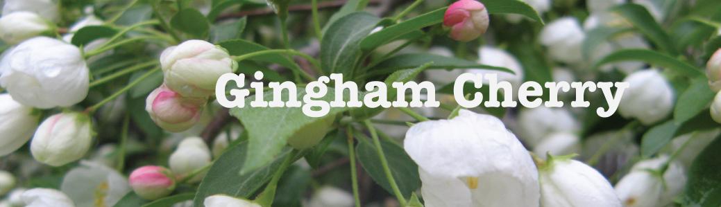 Gingham Cherry