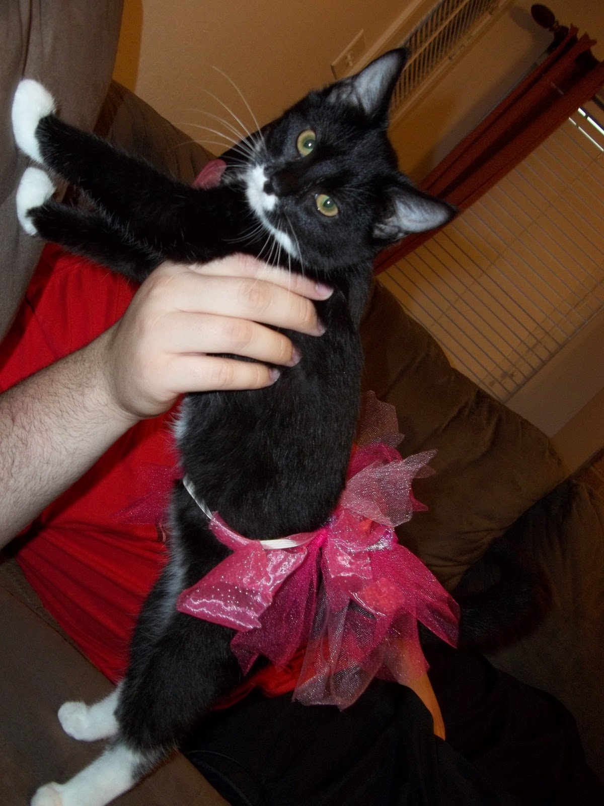 Cats In Tutus Images & Pictures - Becuo