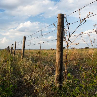 Fence, Winscott Plover Road