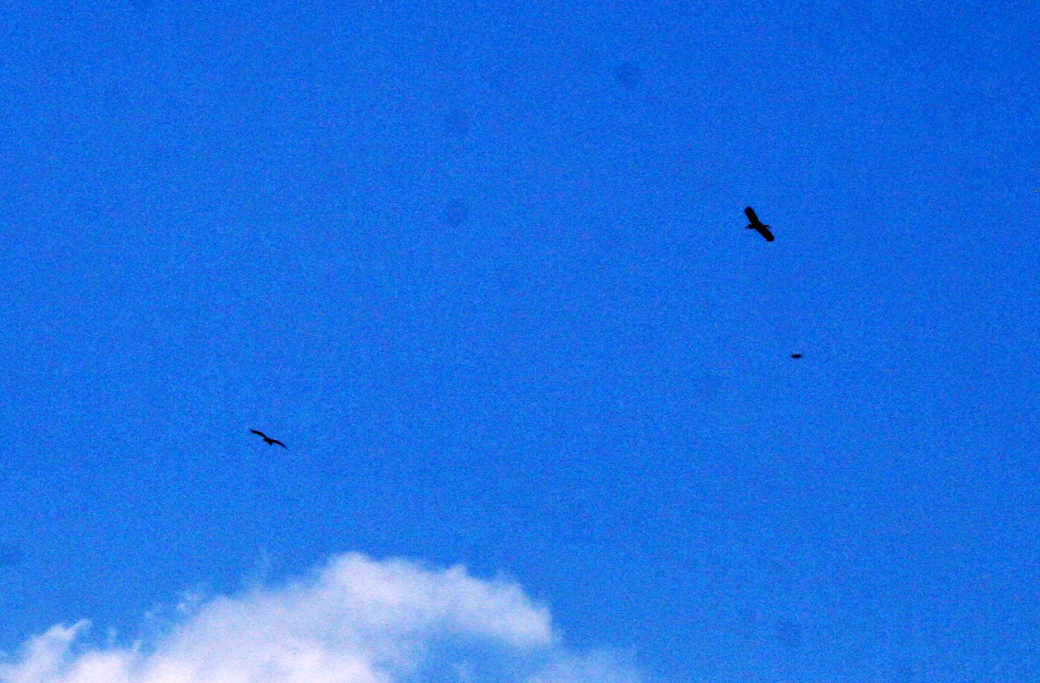 Vultures circling, but not for us
