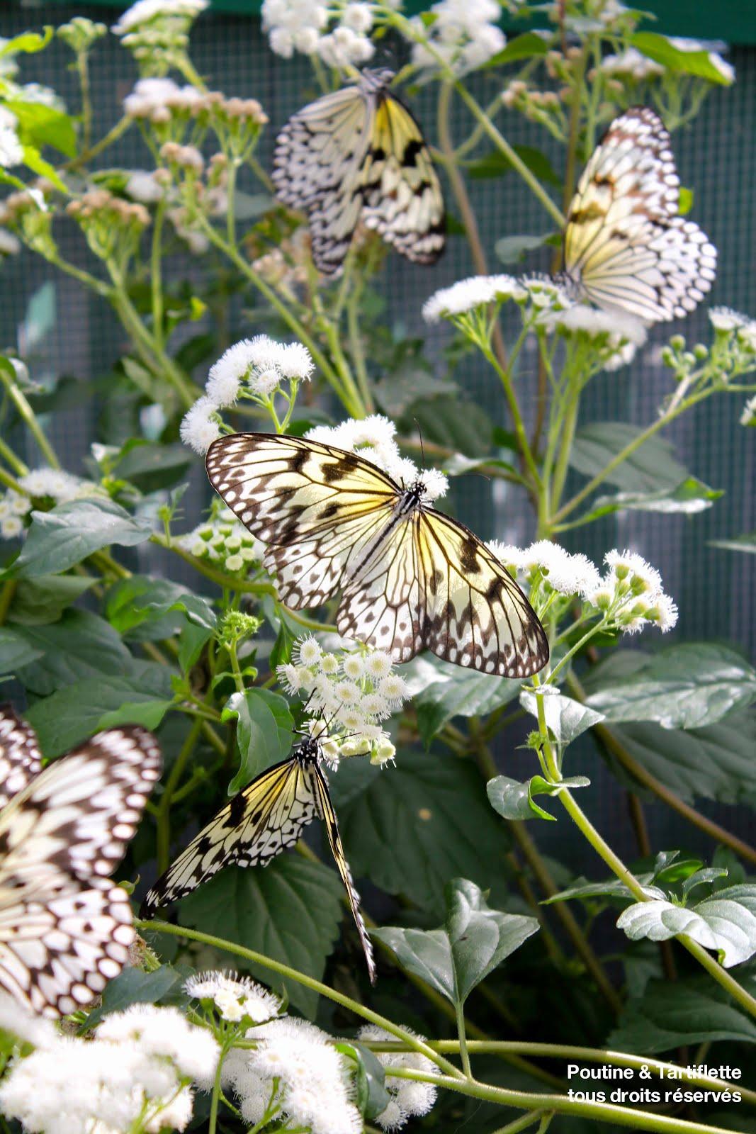 Les papillons au jardin botanique for Papillons jardin botanique 2016