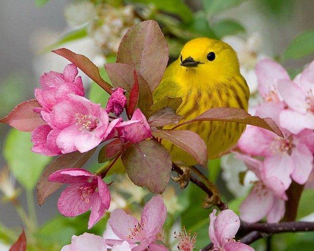 Kuş ve Bahar dalı