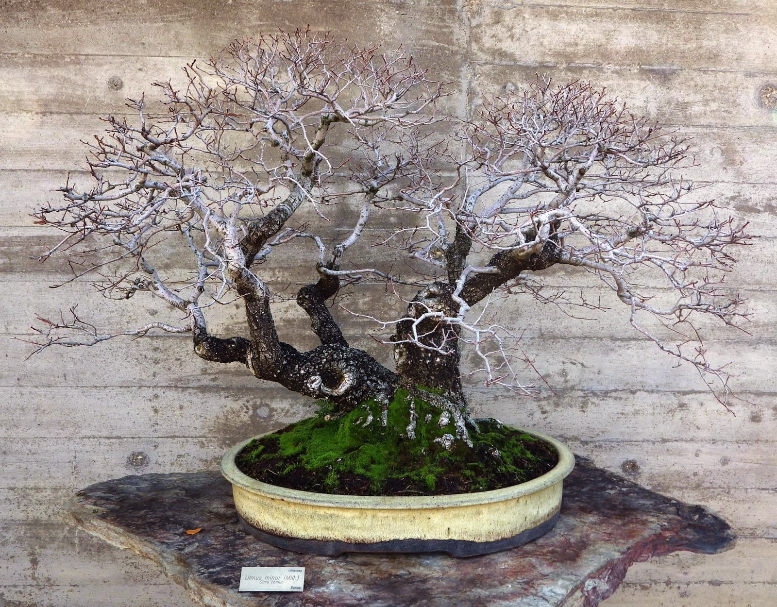 Bespoke Bonsai Stands Even More Trees From Luis Vallejo Estudio