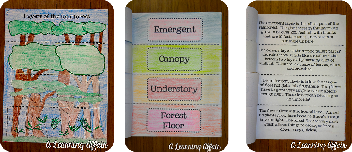 3D Rainforest A Learning Affair – Layers of the Rainforest Worksheet