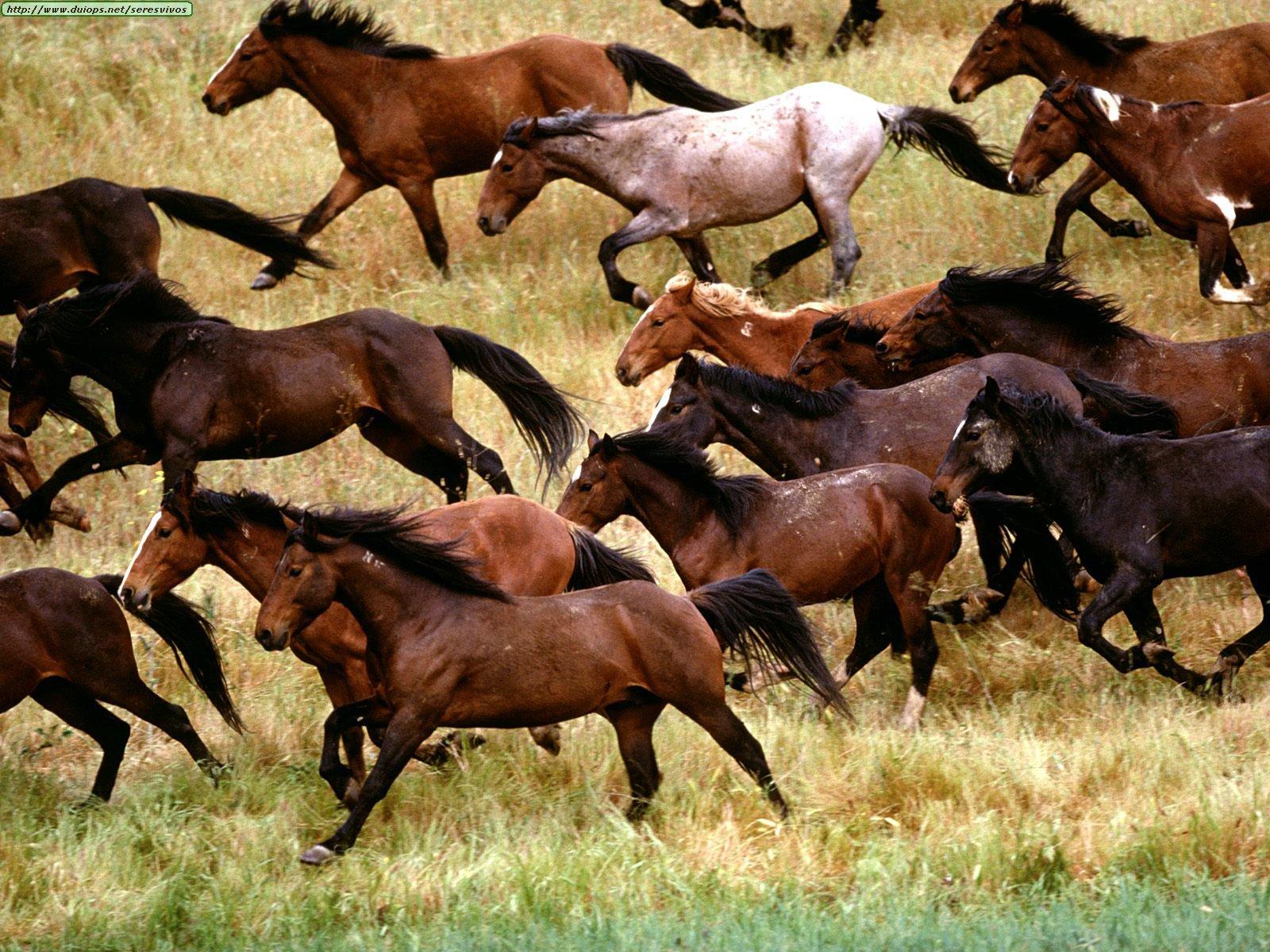 animals horse running free - photo #22