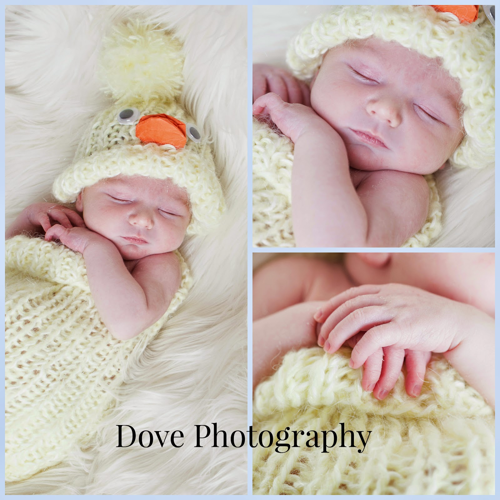 Dove Photography Newborn Photography Blackpool