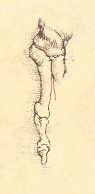 ink, drawing, Leonardo, rodecker, paul rodecker, art, artist, linear