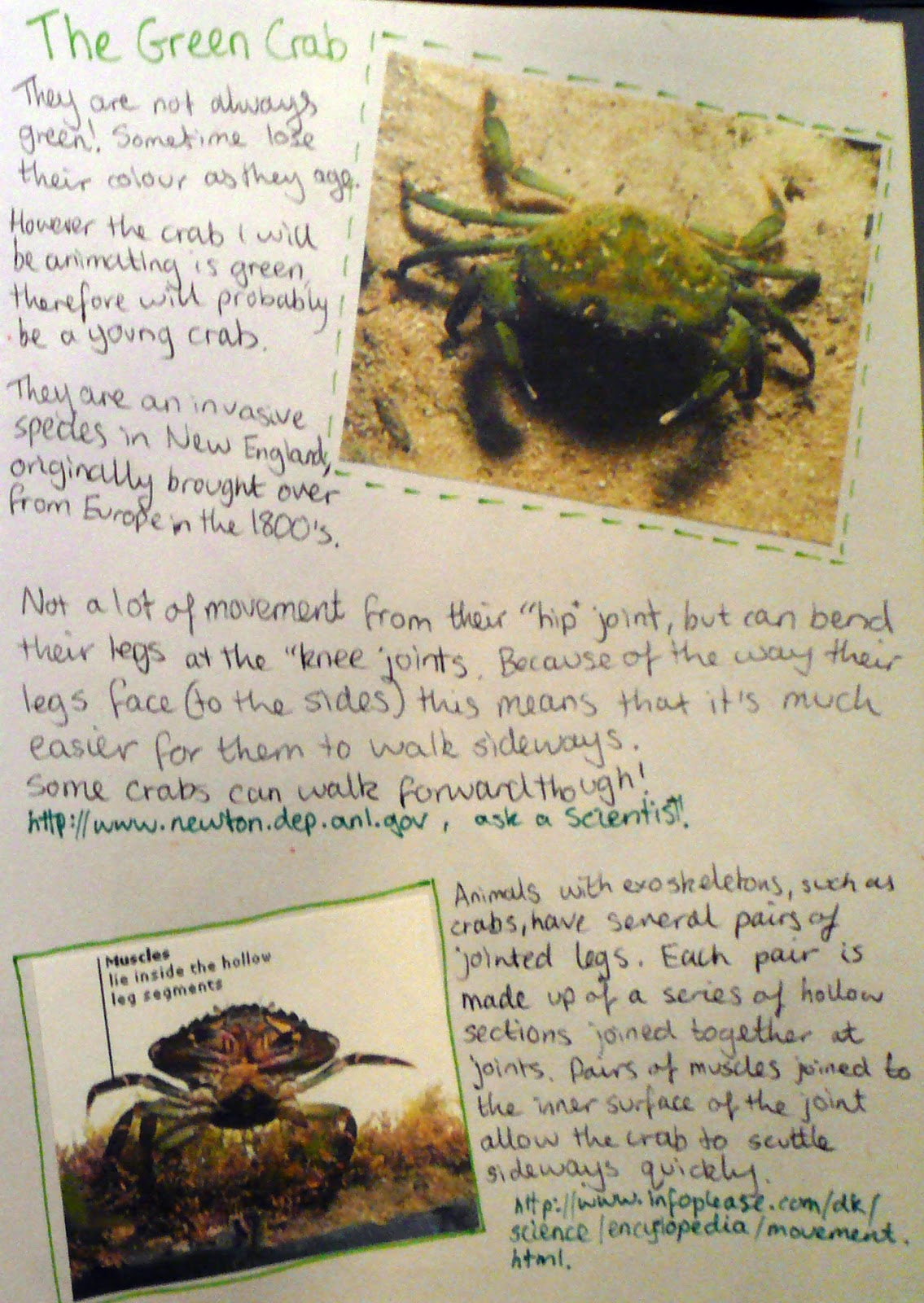 Lilly Durrant - Art and Animation Blog: Year 4, Semester 1 - \'Crab ...