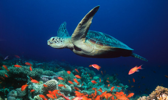 Sea Turtle Pictures 1