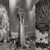 أقدم 5 أشجار في العالم