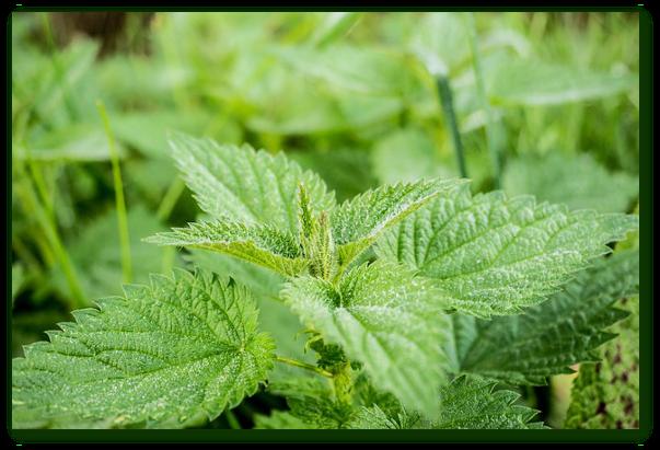 Cele mai bune plante impotriva toxinelor