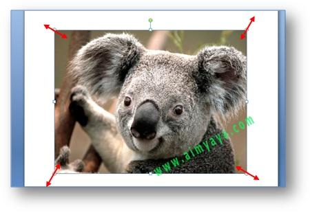 gambar perubahan ukuran untuk penyisipan gambar di dokumen Microsoft Word