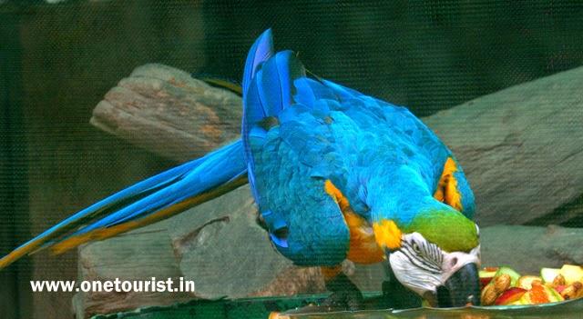 parrot , parrot bird , parrot images ,parrot photos , parrot wallpaper , parrot images download