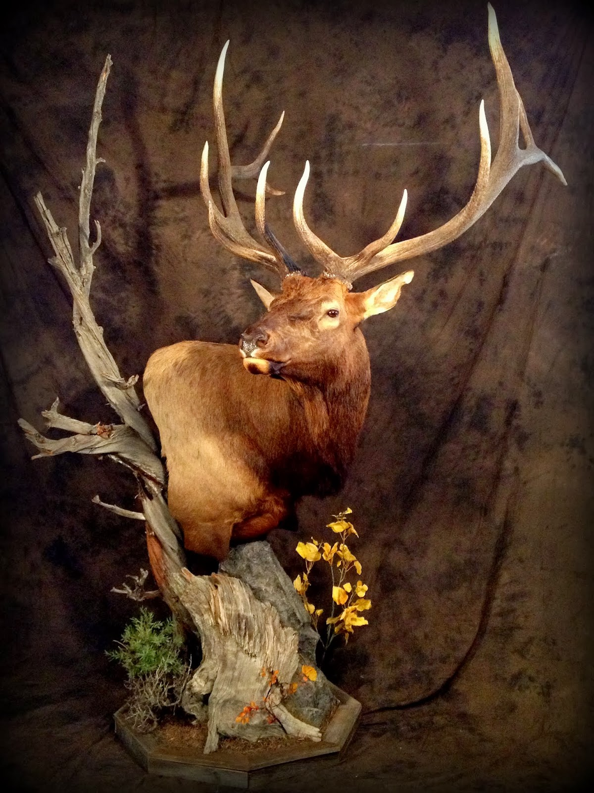 Taxidermy By Josh Hunt Elk