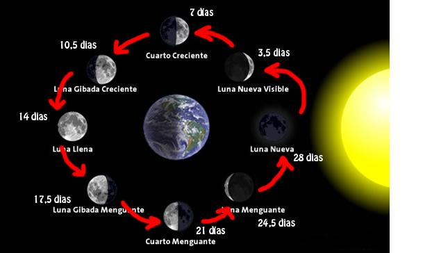 Xpertal las fases de la luna y informaci n de inter s general Estamos en luna menguante
