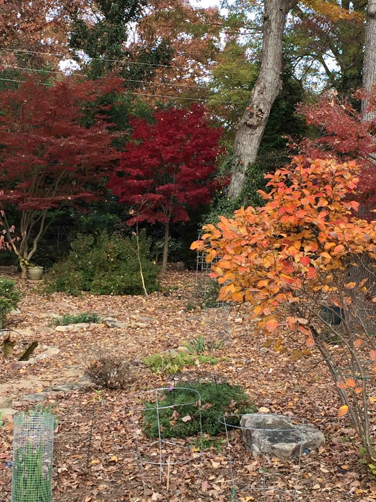 MapleWalk Garden