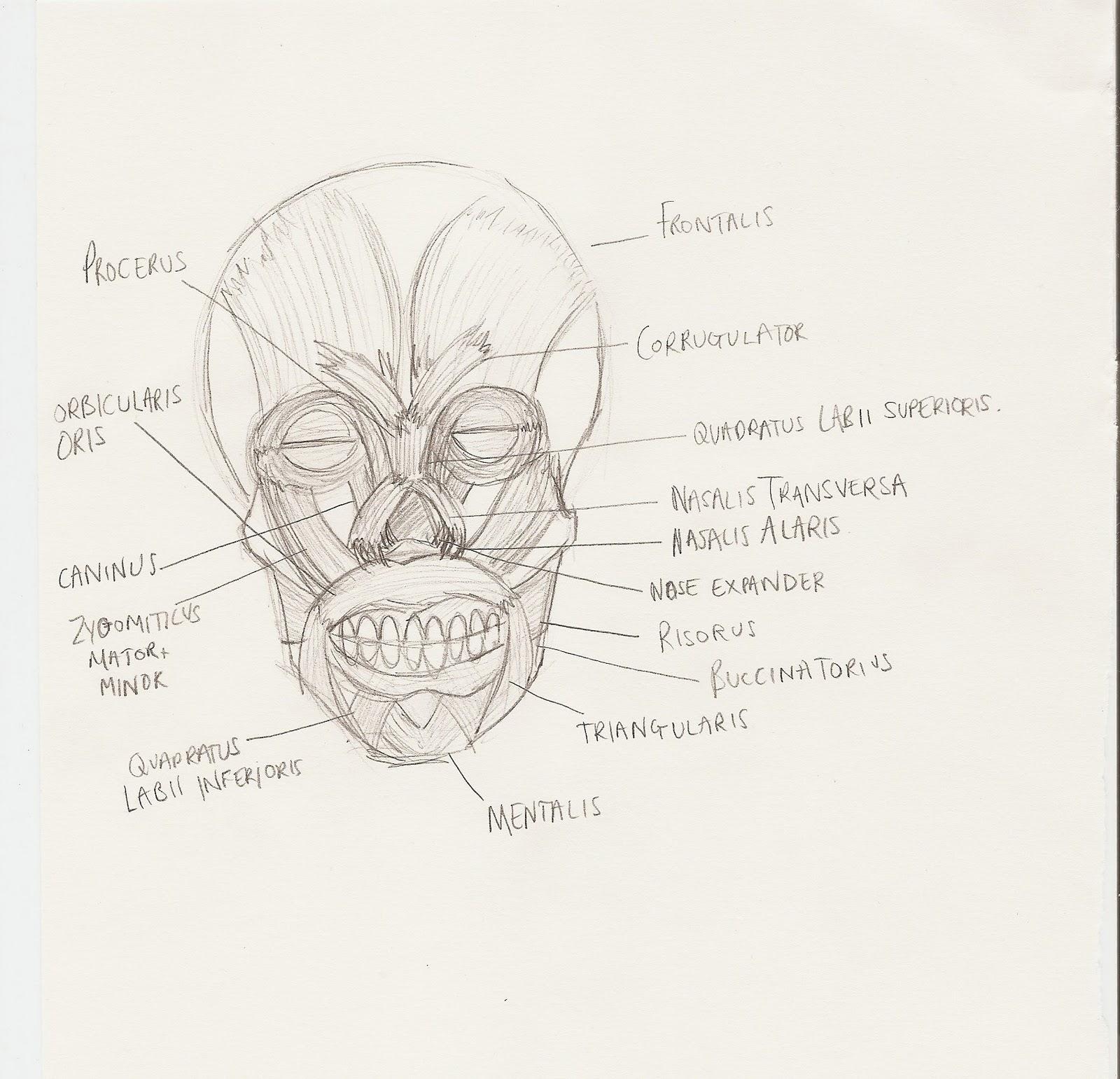 Digital Sculpting  Facial Structure