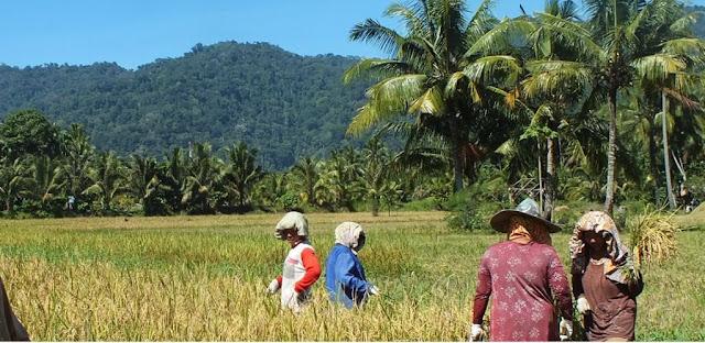 Wilayah ( daerah ) Pesisir Minangkabau