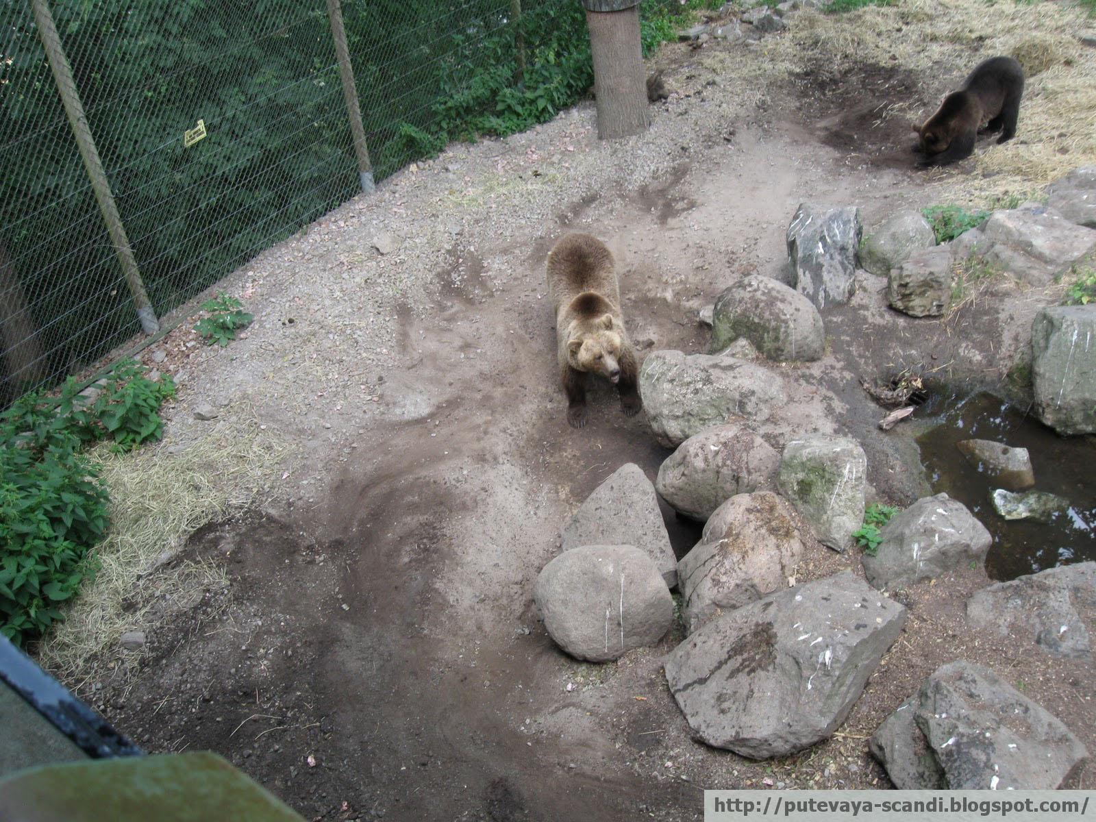 медведи выясняют отношения