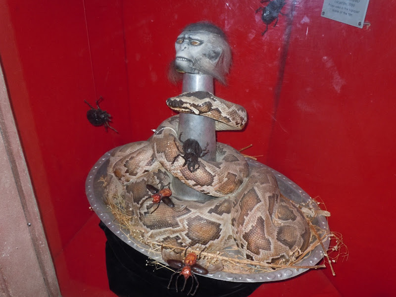 Indiana Jones Monkey brains and snake prop