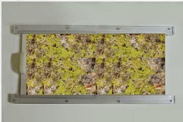 Algae Frame