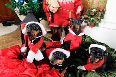Postales de Navidad con perritos y gorritos de Santa Claus