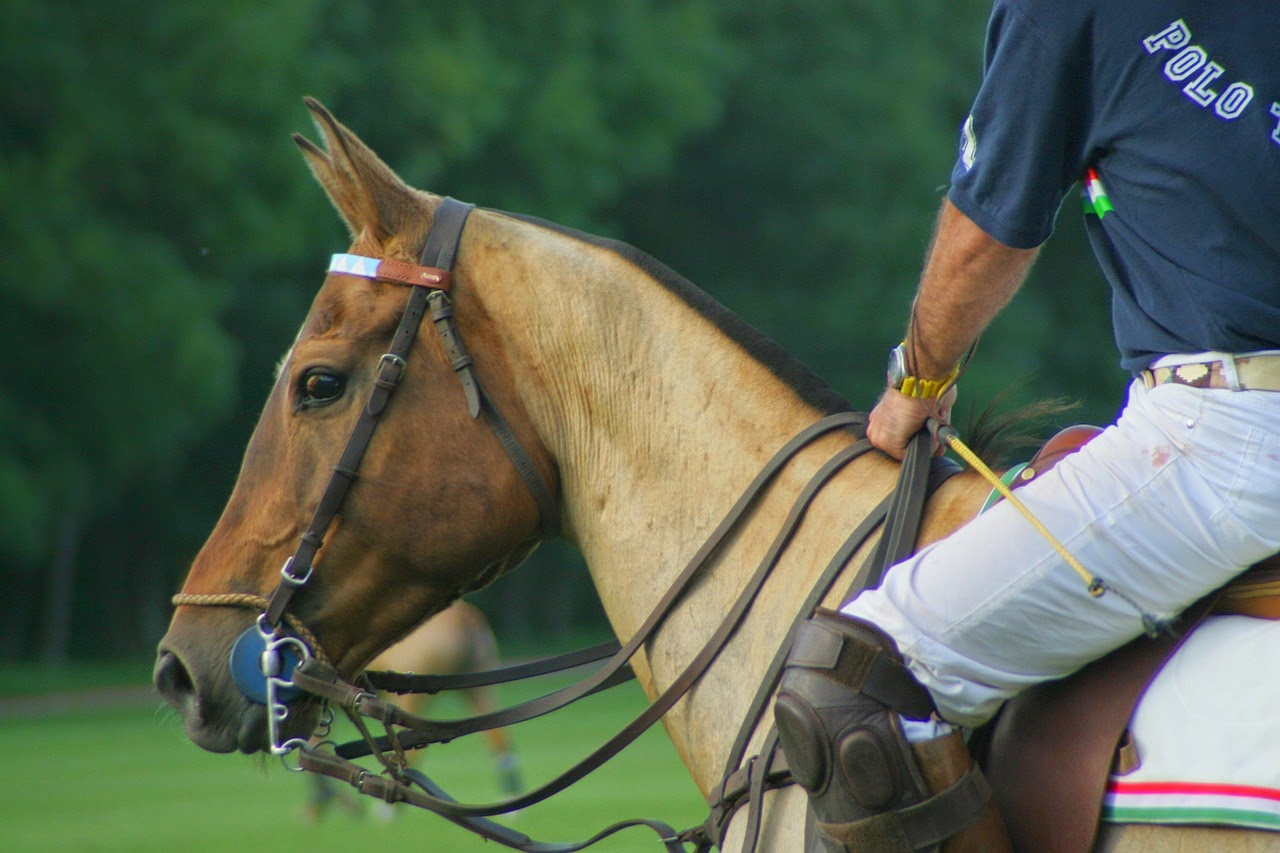 Polo Match Etiquettes: History, Tradition and Attire