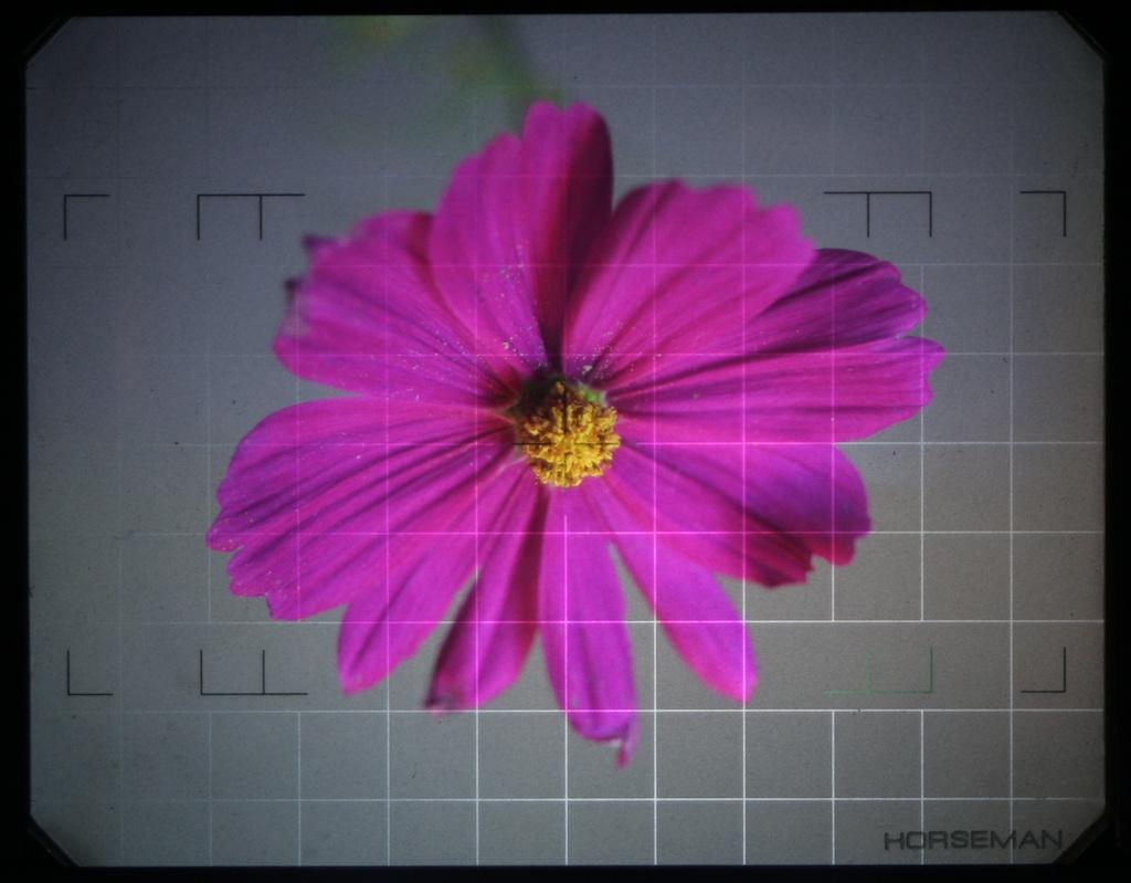 une ann e photo une fleur dans une chambre. Black Bedroom Furniture Sets. Home Design Ideas