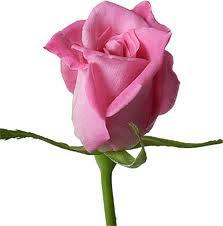 Rahsia Di sebalik Warna Bunga Ros