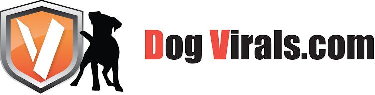 Funny Dog Pics & Videos
