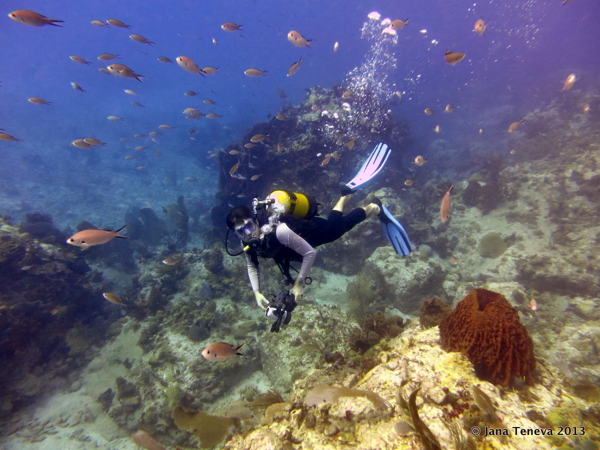 Fishes and diver in les Saintes