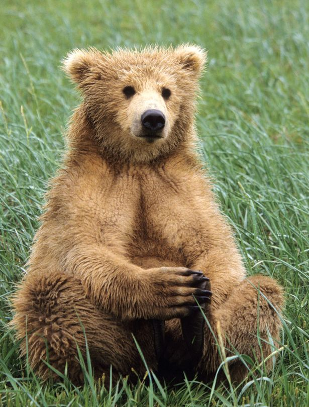 bears dating online Gay bear dating is your 100% free gay bear dating site create your profile for free and find a friend or the possible love of your life.