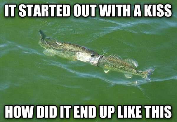30 Funny animal captions - part 19 (30 pics), fish picture with caption